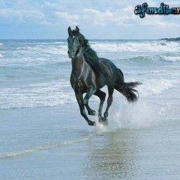 Wild Wild beach - Cavalli sulla spiaggia